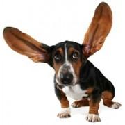 Средства для лечения глаз и ушей