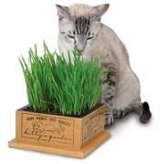 Трава для проращивания