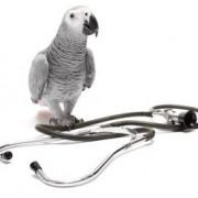 Ветеринарные препараты и средства