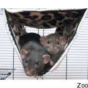 Гамак-туннель Savic RelaxDeLuxeTube для хорьков и крыс (5932)