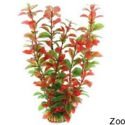 Аквариумное растение Aquatic Nature (12927)
